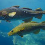 Fisketure med kutter i Jylland