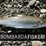 Bombarda fiskeri - stor test af Bombardastænger